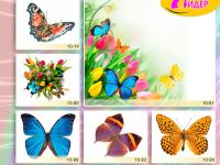 c_200_150_16777215_00_images_Bigprint_40.jpg