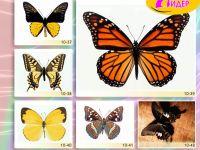 c_200_150_16777215_00_images_Bigprint_42.jpg