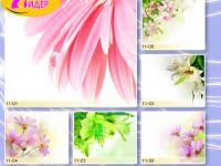 c_200_150_16777215_00_images_Bigprint_43.jpg