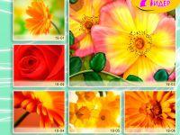 c_200_150_16777215_00_images_Bigprint_50.jpg