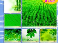 c_200_150_16777215_00_images_Bigprint_62.jpg