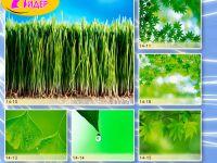 c_200_150_16777215_00_images_Bigprint_63.jpg