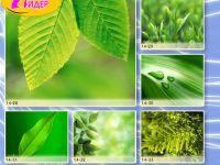 c_200_150_16777215_00_images_Bigprint_65.jpg