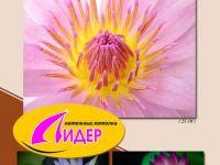 c_200_150_16777215_00_images_fotopechat_86.jpg