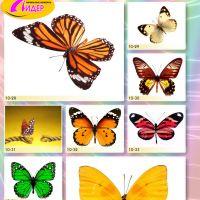 c_200_200_16777215_00_images_Bigprint_41.jpg