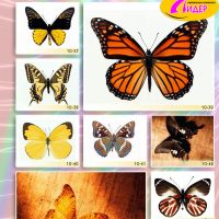 c_200_200_16777215_00_images_Bigprint_42.jpg