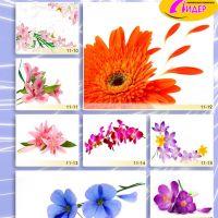 c_200_200_16777215_00_images_Bigprint_44.jpg