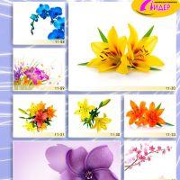 c_200_200_16777215_00_images_Bigprint_46.jpg