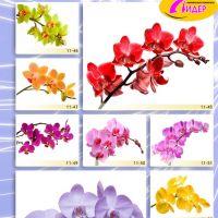 c_200_200_16777215_00_images_Bigprint_48.jpg