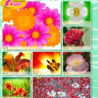 c_200_200_16777215_00_images_Bigprint_51.jpg