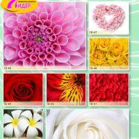 c_200_200_16777215_00_images_Bigprint_55.jpg