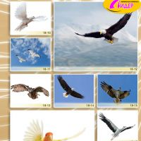 c_200_200_16777215_00_images_Bigprint_78(1).jpg