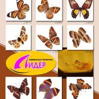 c_200_200_16777215_00_images_fotopechat_28.jpg