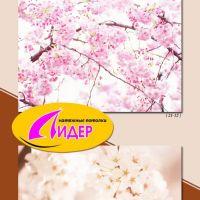 c_200_200_16777215_00_images_fotopechat_66.jpg