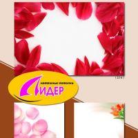 c_200_200_16777215_00_images_fotopechat_69.jpg
