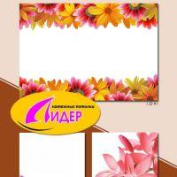 c_200_200_16777215_00_images_fotopechat_70.jpg
