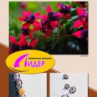 c_200_200_16777215_00_images_fotopechat_81.jpg