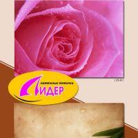 c_200_200_16777215_00_images_fotopechat_85.jpg