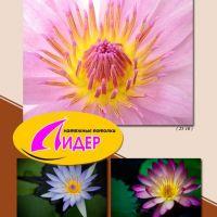 c_200_200_16777215_00_images_fotopechat_86.jpg