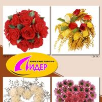 c_200_200_16777215_00_images_fotopechat_91.jpg