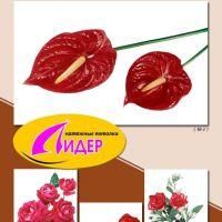 c_200_200_16777215_00_images_fotopechat_98.jpg